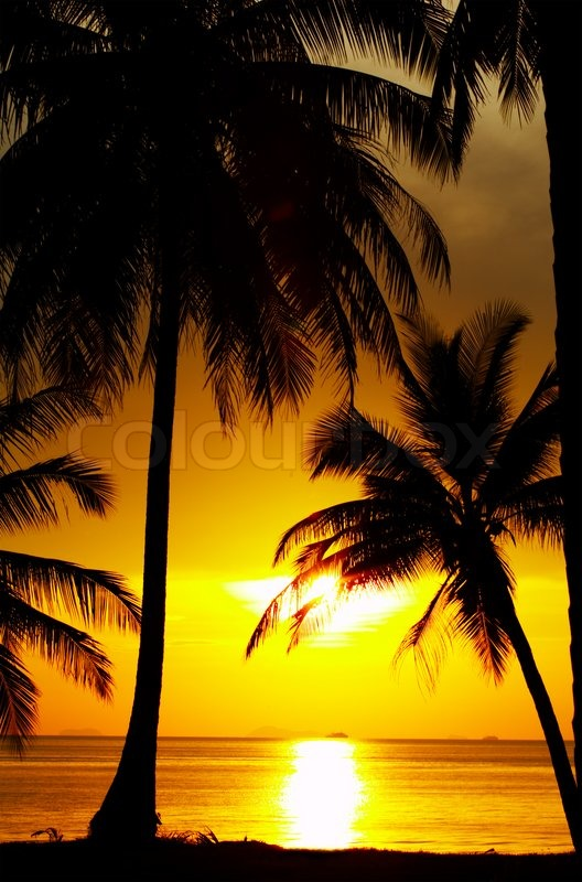 Stock image of 'view of palms black outlines during sunset on the beach'