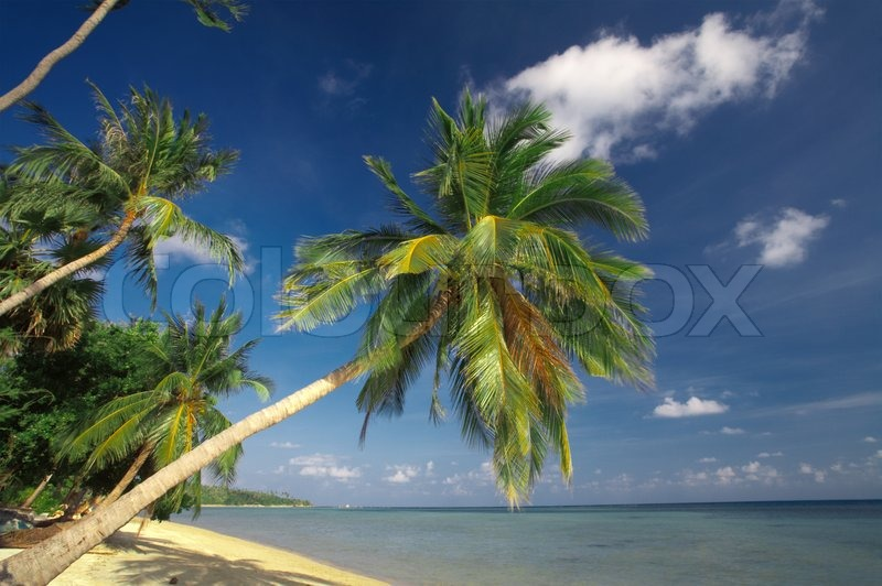 Stock image of 'view of  a few  palms on the tropic bay  early in the morning'