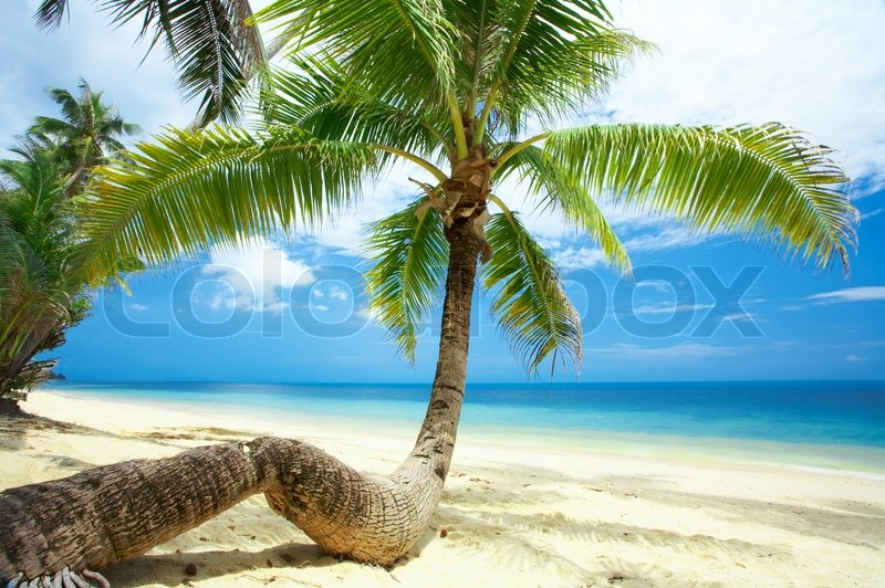 Stock image of 'view of nice palm crawling through the beach to the water'