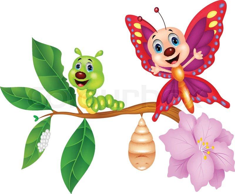 Api management in digital transformation - Schmetterling Metamorphose Cartoon Vektorgrafik Colourbox