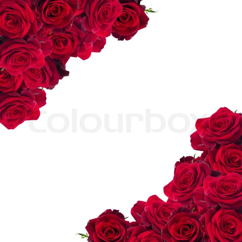 Stock image of 'frame of  dark red roses  isolated on white background'