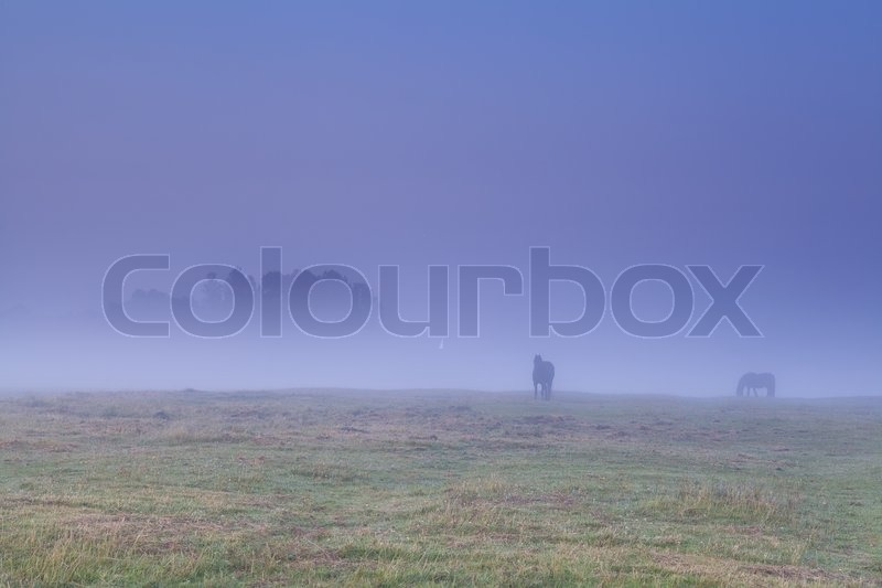 Stock image of 'horses grazing on pasture in dense fog during sunrise'