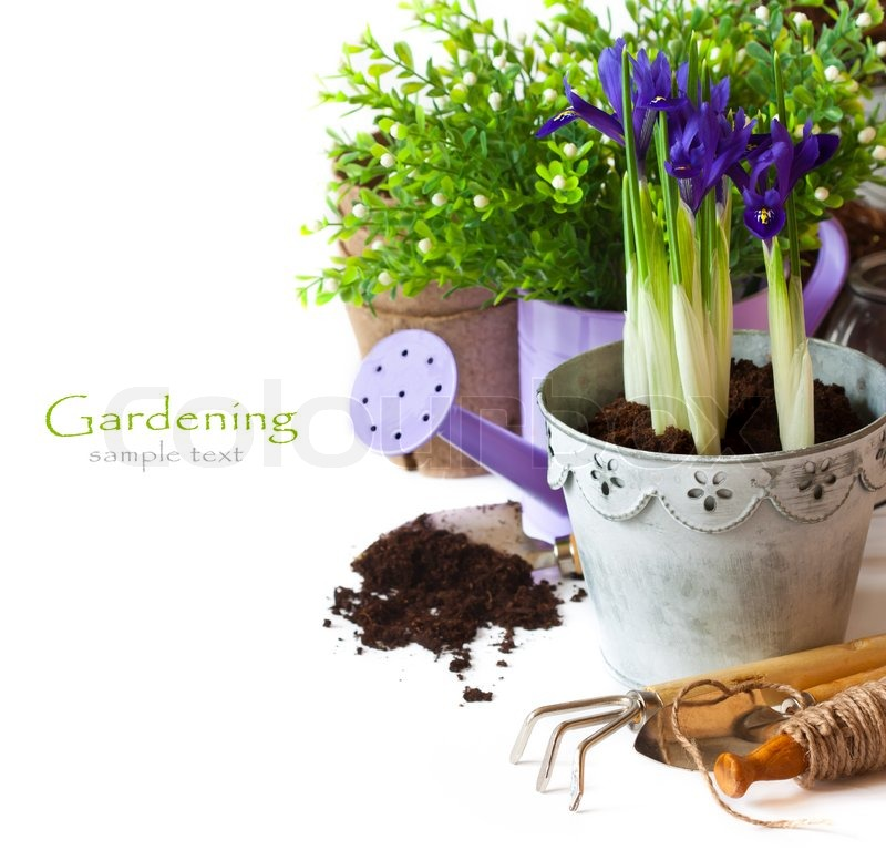 Stock image of 'Spring time. Beautiful spring flowers and gardening tools on a white background.'