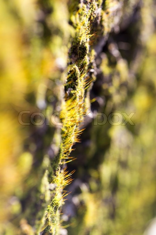 Stock image of 'Moss in nature. macro'