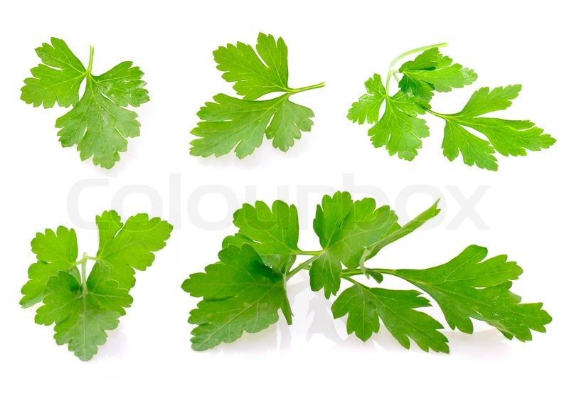Stock image of 'Fresh Green Parsley Isolated on White Background'
