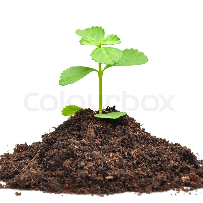 Stock image of 'Small green sapling growing out from heap of soil'