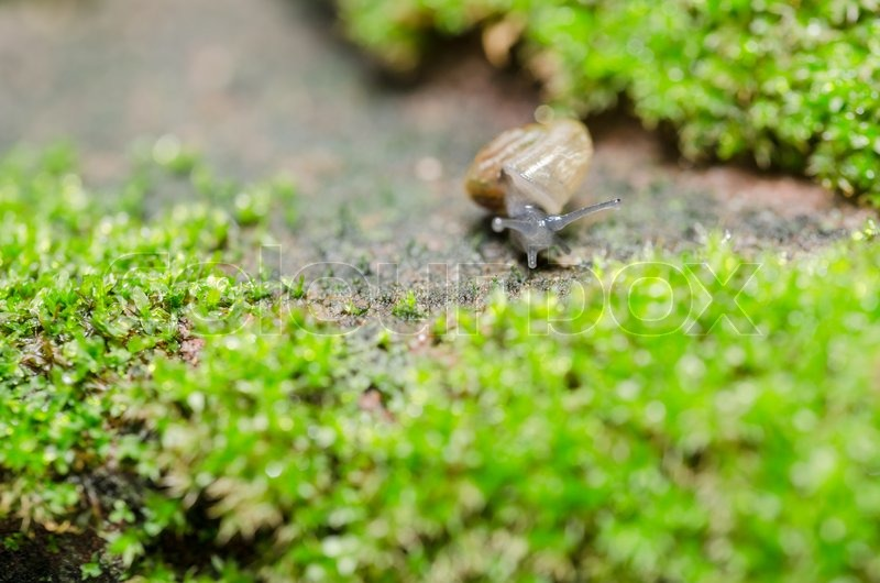 Stock image of 'Snails and moss macro shot in the garden or forest'