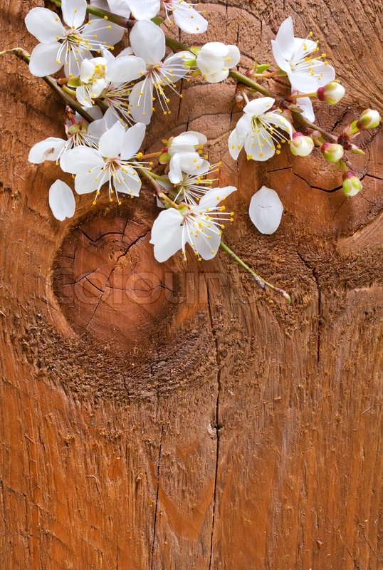 Stock image of 'Flowers on wooden background'