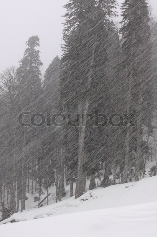 Stock image of 'View on forest at snowfall'