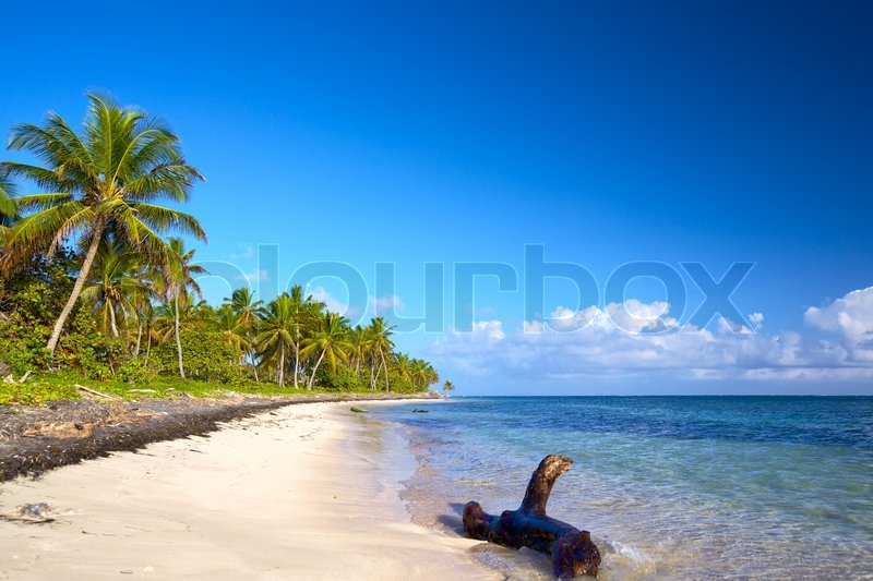 Stock image of 'Untouched tropical beach with palm trees, Dominican Republic'