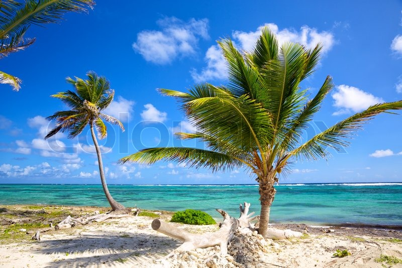 Stock image of 'Caribbean coastline with palm trees, Dominican Republic'