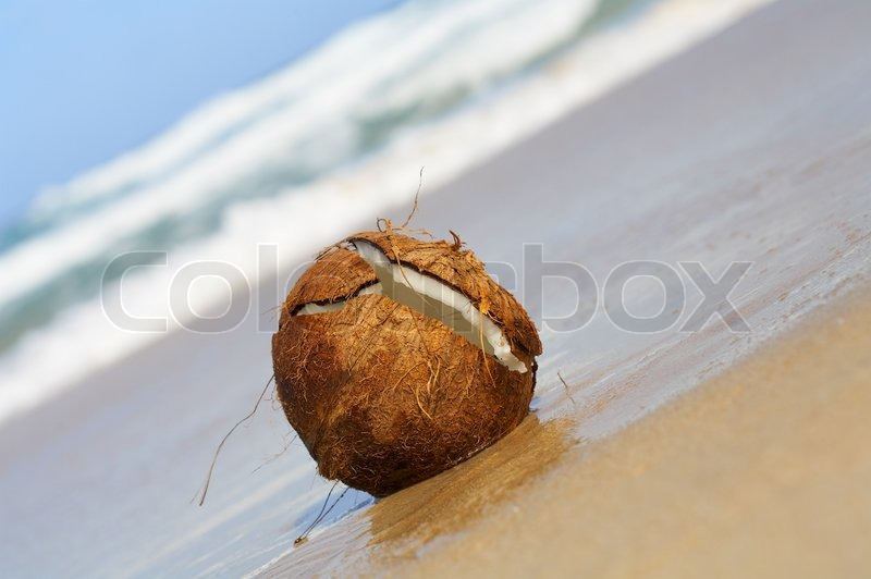 Stock image of 'view of lonely wet cracked coconut on sandy beach'