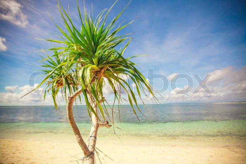 Stock image of 'Little tropical coconut palm tree in desert island background blue sky'