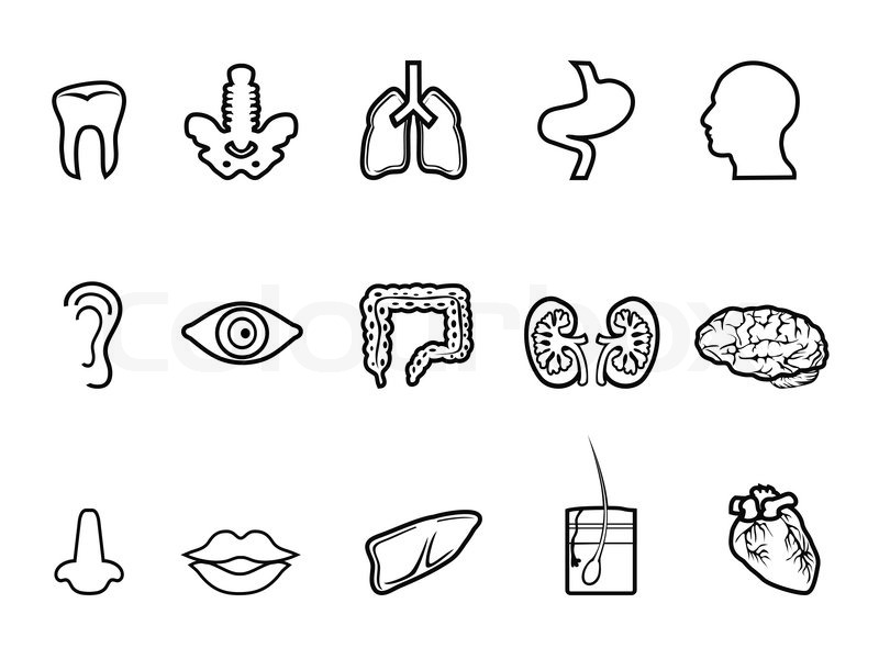 Isolated Black Human Anatomy Outline Icon From White Background