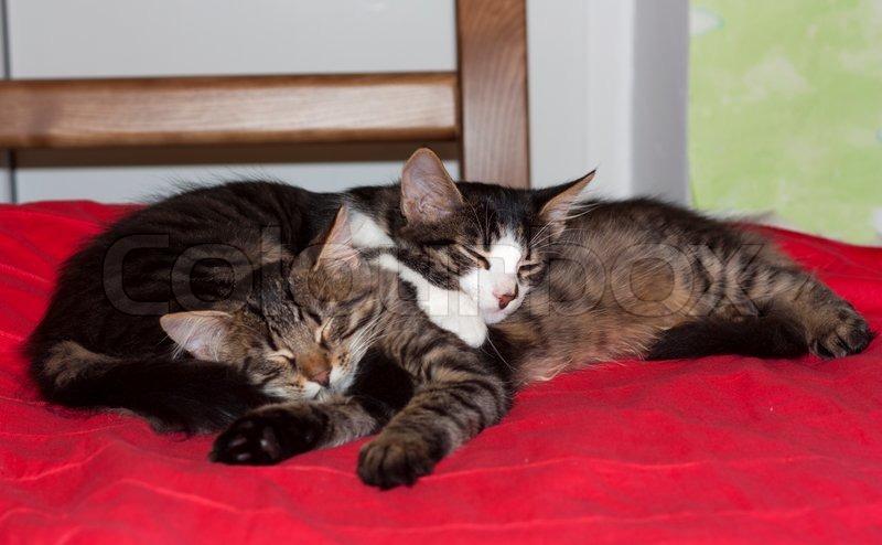 Cats cute couple animal kitty photo. Housecats friends, stock photo