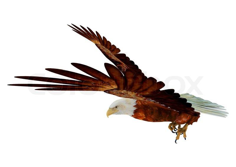 Soaring eagle png