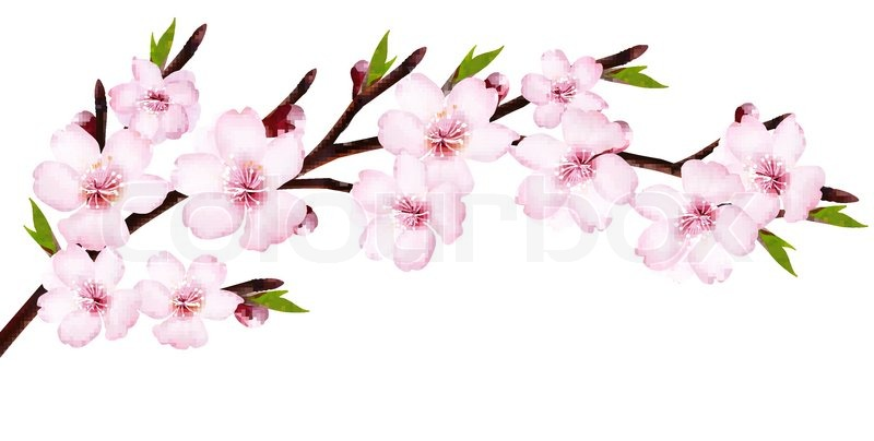 spring background of a blossoming tree branch with spring flowers rh colourbox com vector spring tx vector spring background