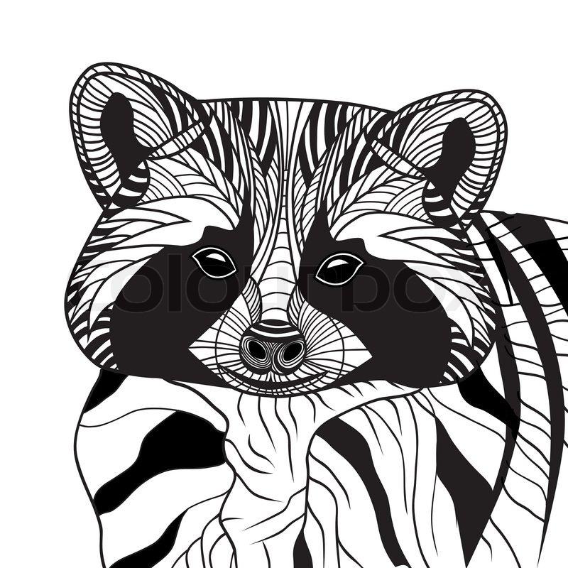 Line Drawing Raccoon : Waschbär oder coon kopf vektor tierische illustration für