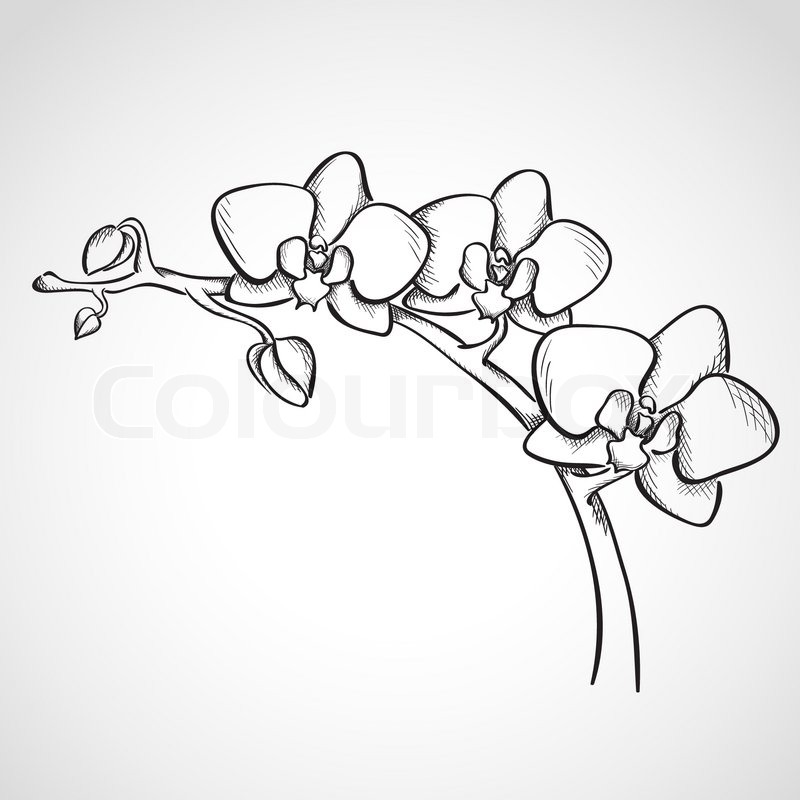 Orchid Flower Line Drawing : Sketch orchid branch hand drawn ink style stock vector