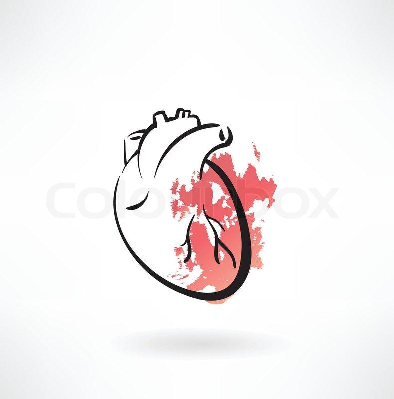 Anatomie, freigestellt, muskel | Vektorgrafik | Colourbox