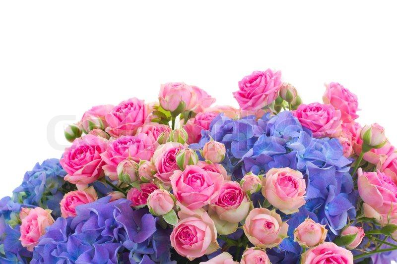 Pink And Blue Flowers Border | www.pixshark.com - Images ...
