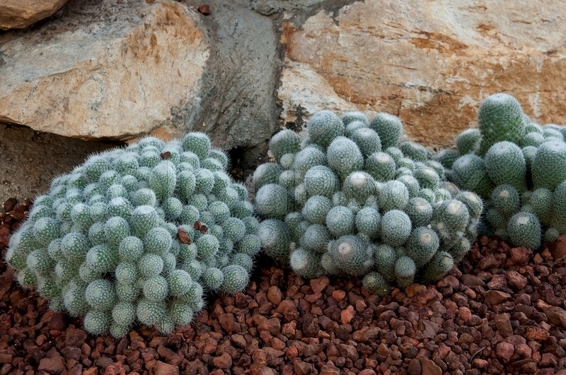 Cactus plant on red rock, stock photo
