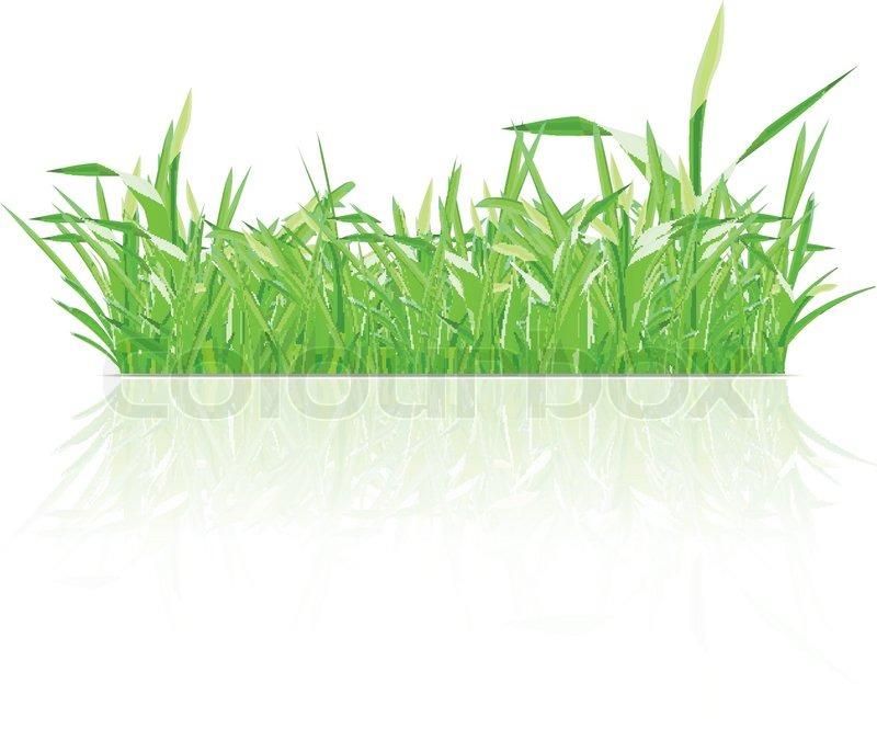 Grune Bohnen Farbe : Grüne Gras  Vektorgrafik  Colourbox