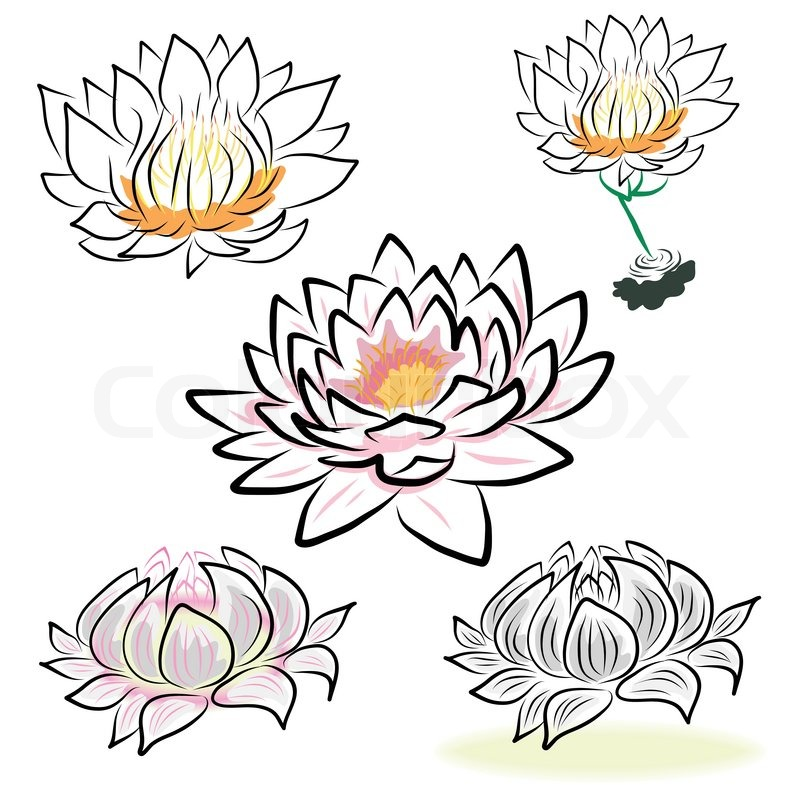 Hand Drawing Water Lily Lotus Stock Vector Colourbox