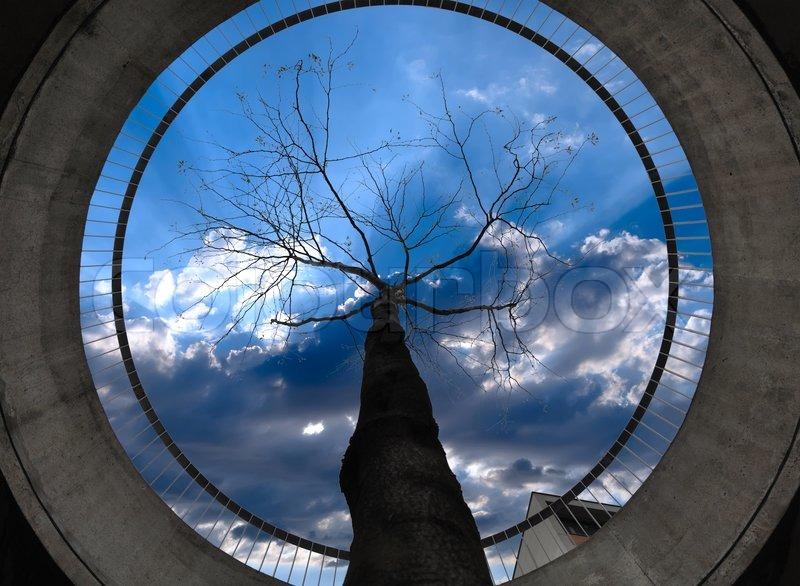СУХОЙ ПИЛЕНЫЙ деревья в бетонных кольцах них предлагают своим