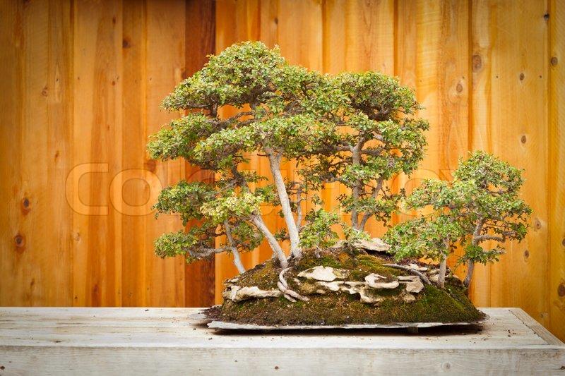 ulme bonsai baum wald gegen holz zaun stockfoto colourbox. Black Bedroom Furniture Sets. Home Design Ideas