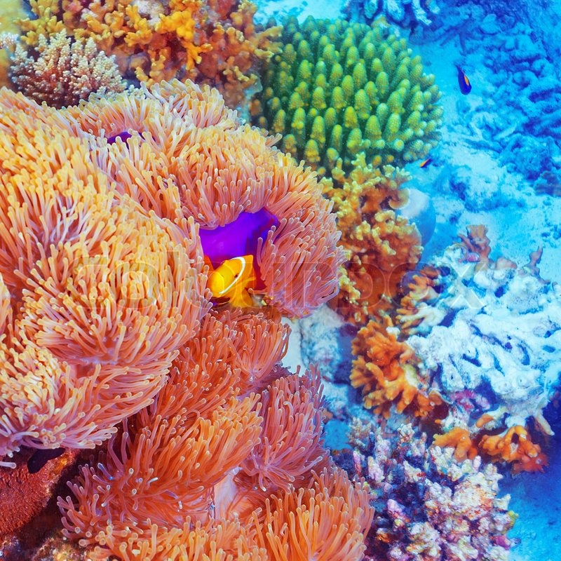 Beautiful Colorful Coral Reefs And Fish Colorful Coral Reef Fi...