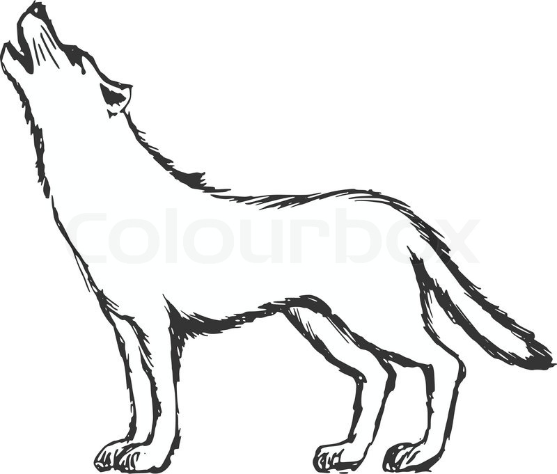 hand drawn sketch cartoon illustration of wolf vector