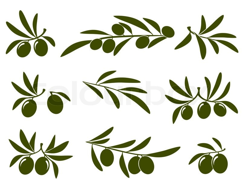 Olive branch set on white background | Stock Vector ...
