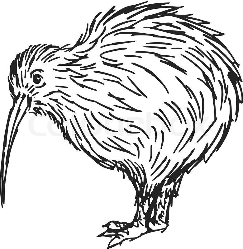 Kiwi Vogel Kleurplaat Hand Drawn Sketch Cartoon Stock Vector Colourbox