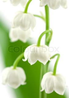 Billede af 'liljekonval, Plant, plante'