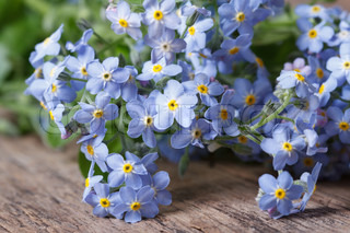 Billede af 'forgetmenot, background, ingen'