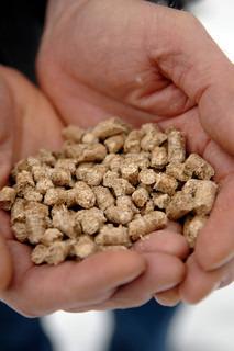 Image of 'wood pellet, biofuel, fuel'