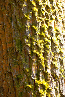 Pattern and colors of tree trunk bark and moss
