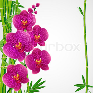 Eps10 Floral Design Background Bamboo And Orchids