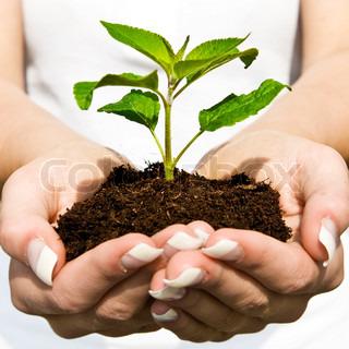 Grøn plante i hænderne