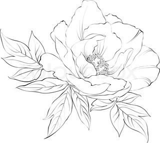 Ink Painting Of Peony Isolated On White