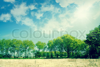 Green trees on dry land