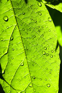 green leaf with water drops close up