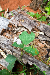 green leaves with wooden bark