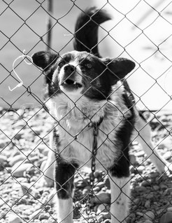 angry dog behind a fence