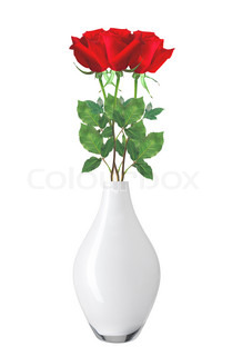 beautiful red roses in vase isolated on white