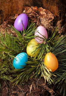 Shot of painted colorful easter eggs on fir tree