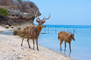 Two deer in ocean