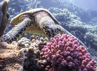 Billede af naturlige dyreliv miljø