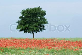 Billede af 'Blomst, rødmosset, blomstre'
